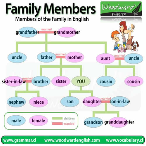 Learn italian grammar and vocabulary download