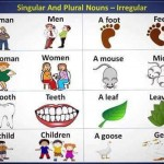 Singular and Plural Nouns - Irregular