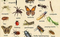 Insects - English Vocabulary