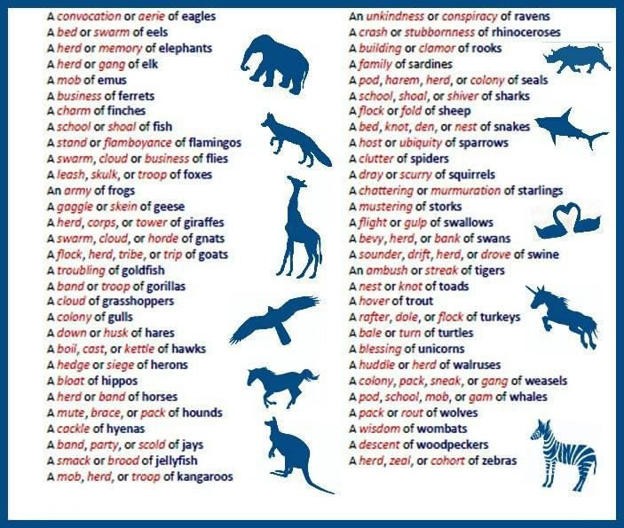 Collective nouns for animal groups-2