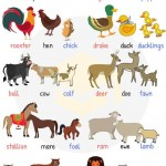 Male, Female and Young Animals - English Vocabulary